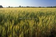 rye.field.sc_1