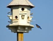 bluebird2444
