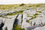 2004.7.Ire.BurrenDSC_0128