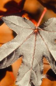 indian.hut.leaf