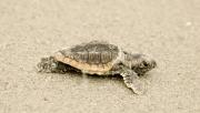 2008.7.turtle_DSC0016