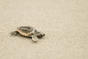 2008.7.turtle_DSC0013