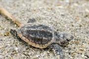 2008.7.turtle_DSC0004